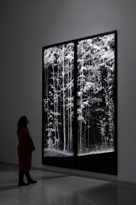art digital 3d-scaning trees- remains- vallée de Joux-  installation view at How Art Museum, Shanghai